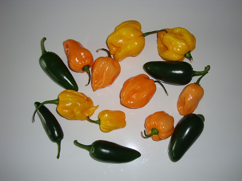 Habanero and Jalapeno Peppers